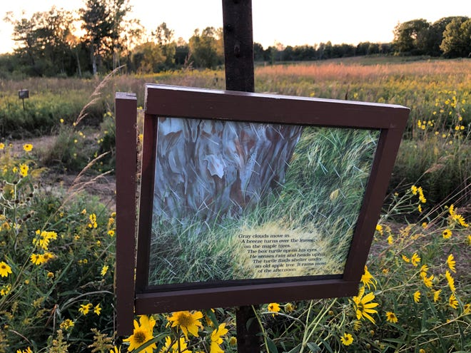"""The prairie maze winds by one of the storybook signs, telling the story of """"Box Turtle at Long Pond"""" at Potato Creek State Park in North Liberty."""