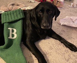 Beauty, an 8-year-old Black lab, is recovering from a number of injuries she sustained in a fight with an alligator to protect a group of ducks.