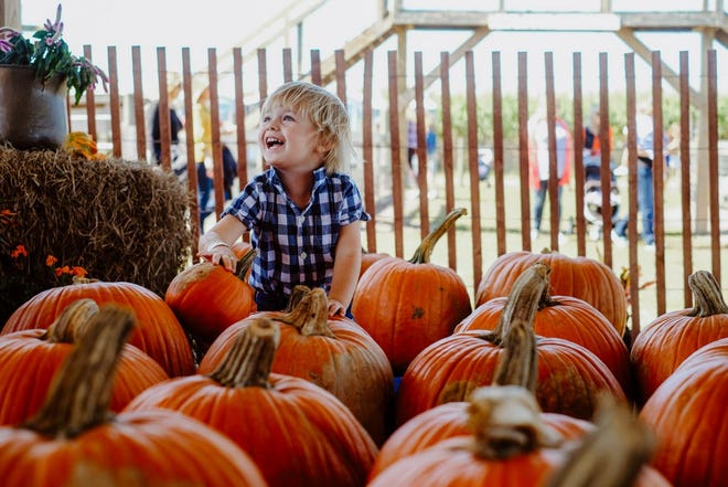 The Pumpkin Festival is Saturday at Wesley Wells Farms.