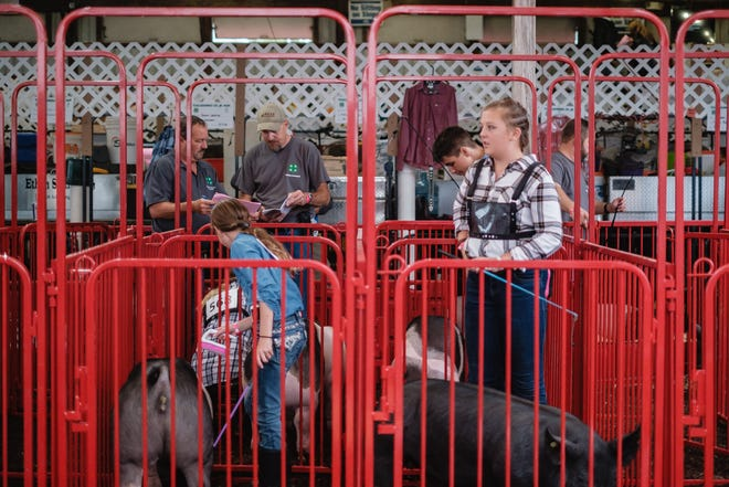 Katrina Stoneman, from New Cumberland, right, waits in the swine pens before the Junior Swine Show during a soggy Tuesday at the Tuscarawas County Fair, Tuesday, September 21 in Dover.