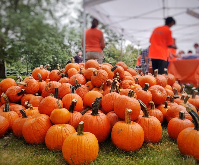 The North Andover Merchants Association held its annual Fall Festival on the North Andover Common Saturday, marking the festival's return from last year's pandemic shutdown.
