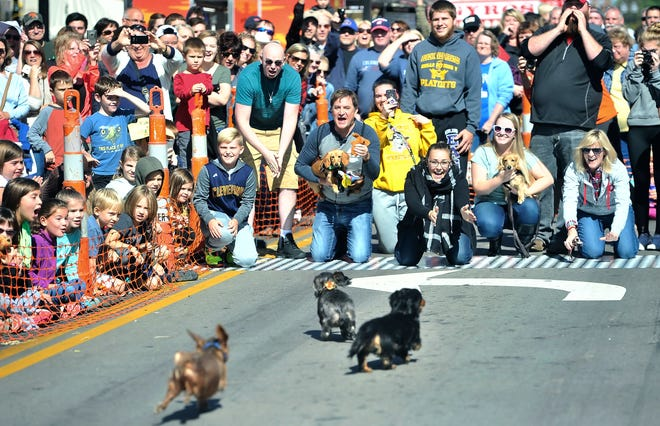 Owners stand at the finish line to call their wiener dogs at Woosterfest 2019.