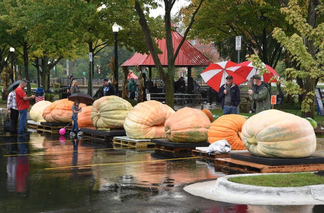 Giant pumpkins are on display at the 2019 Pumpkin Palooza in Dundee. This year's event is Oct. 2. Monroe News photo by Tom Hawley