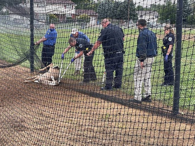 Jackson Township police join Kent State University Stark campus security and grounds crew in freeing a deer caught in the batting cage nets Wednesday.