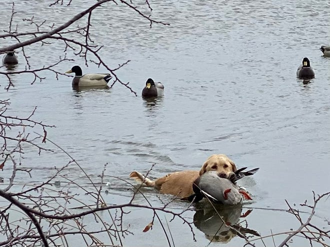 For Iowa's duck hunters to be successful, everything relies on weather.