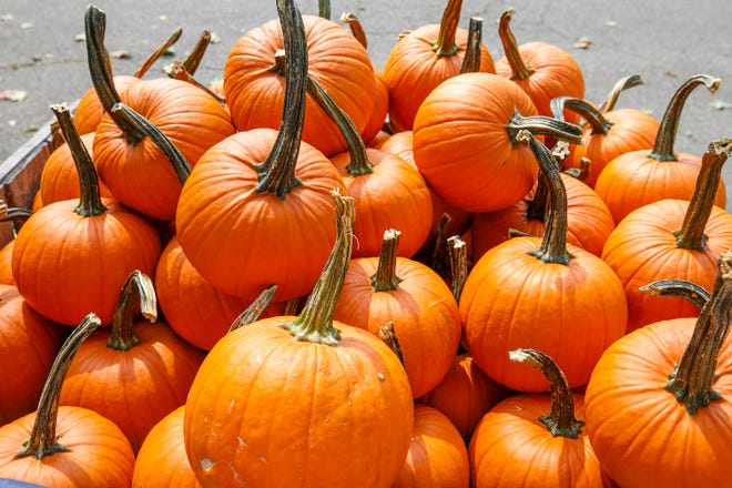 Pumpkins are displayed at Old Bishop Farms on Meriden Road in Cheshire, Conn., on Wednesday, Sept. 15, 2021.