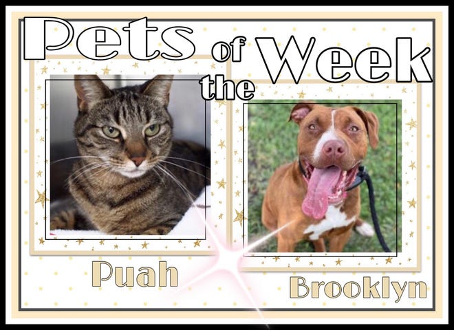 Pets of the Week: Puah and Brooklyn . https://www.burlingtoncountytimes.com/story/lifestyle/2021/09/24/pets-week-fall-love-warm-hearted-dog-cat/8358927002/