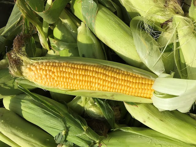 Farmers can potentially save money on nitrogen fertilizer if sweet corn is the previous crop.