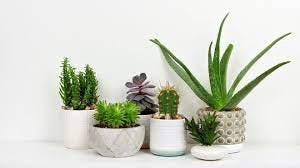 Make a goal to get the houseplants indoors before the end of September.
