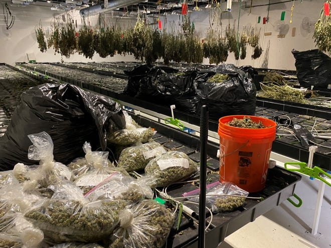 Instead of smoke, Pawtucket firefighters answering an alarm at the former Gamm Theatre in the Pawtucket Armory Arts Center found a large marijuana growing operation.