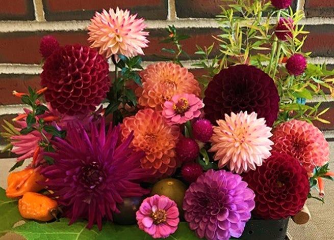 A basket arrangement of dahlias.