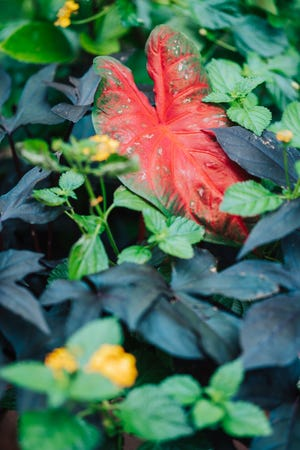 Tropical plants are part of Minnetrista's annual displays.