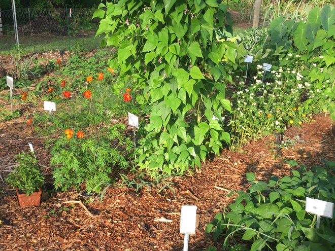 Planting in diverse groups instead of rows of the same plant helps confuse damaging bugs.