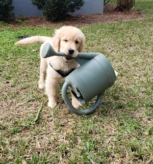 Here is Cody, eager to help water the garden.