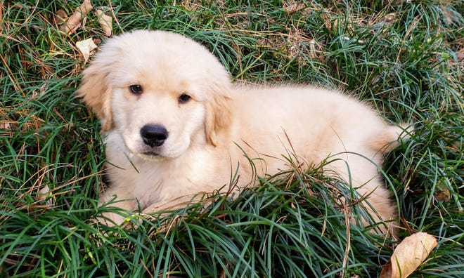Dogs seem to love the soft mondo grass. This shade tolerant grass holds up well.