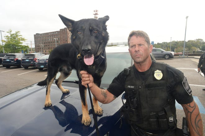 Brockton Police Department two new dogs after 16 weeks in the police academy with Department of Correction head trainer Sergeant Bob Diliddo ,  and K9 Kilo  on Friday, Sept. 24, 2021.