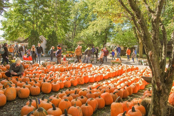 Visitors will find pumpkins, activities and entertainment available outdoors when the Great Pumpkin Patch opens for the season near Arthur.