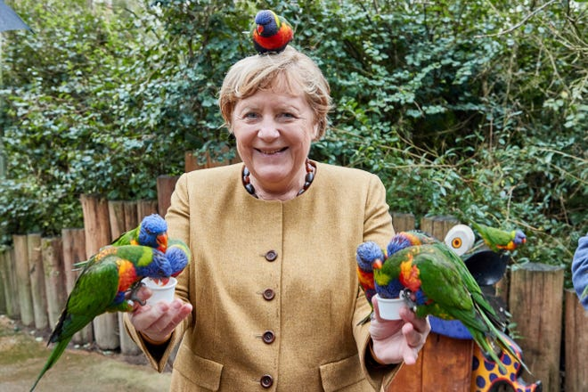 German Chancellor Angela Merkel Feeds Australian Lories in Marlow Bird Park in Marlow, Germany, Thursday, September 23, 2021. (Georg Wendt/dpa via AP)