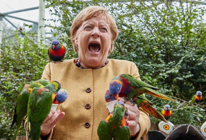 German leader Angela Merkel nicked by parrots