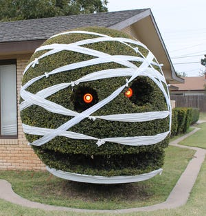 Halloween is one of many holidays and occasions the famous shrub at 58th Street and Indiana Avenue would change its decorations for.