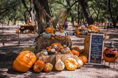 Pumpkins, gourds and other fall decor are on display for sale at Shadow Creek Pumpkin Patch near Midlothian in 2019.