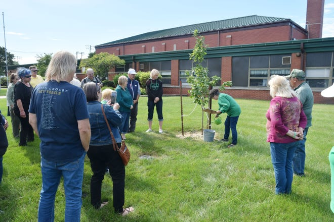 Bobbi Jackson Rapczak pours water on the roots of the Wethersfield Class of 1970 memory tree Saturday as the names of the 11 class members who have passed away were read.