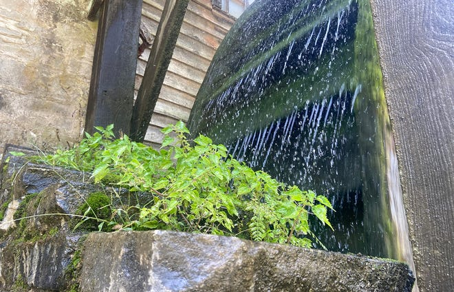 Some plants grow as drops of water cascade off the millwheel at Spring Mill State Park on Sunday afternoon. The Pioneer Village was open Sunday for park visitors to learn some history of early Lawrence County and enjoy some sunshine and mild temperatures.