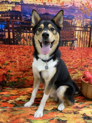 Stewie is available for adoption through WARL.