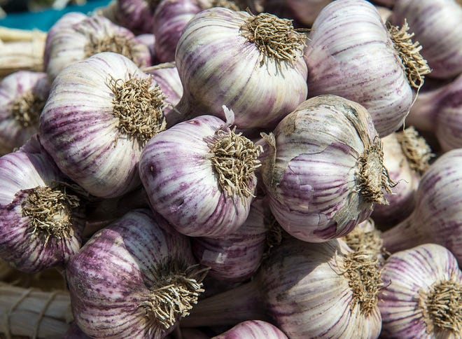 September through November is the best time to plant garlic. Here are some tips.