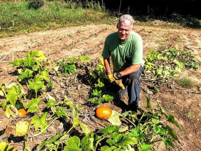 Steve Apps shares rueful grin while showing off the dismal crop of pumpkins that struggled to thrive in the Apps' farm garden this summer.