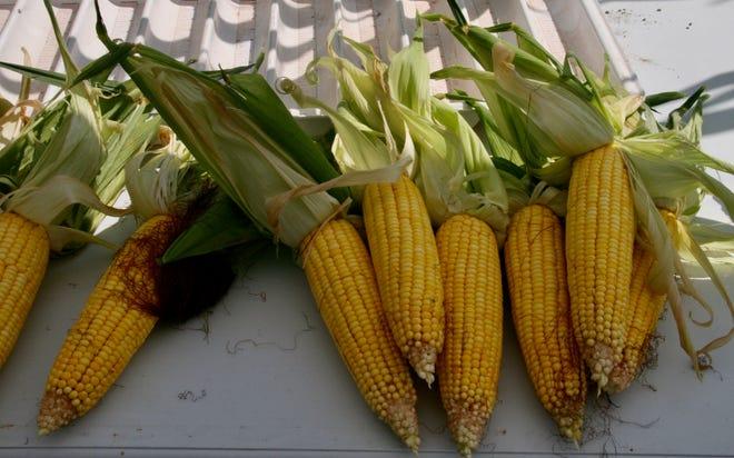 This random corn sample was from the Trinrud farm.