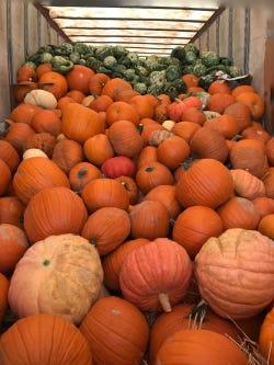 Load of pumpkins.