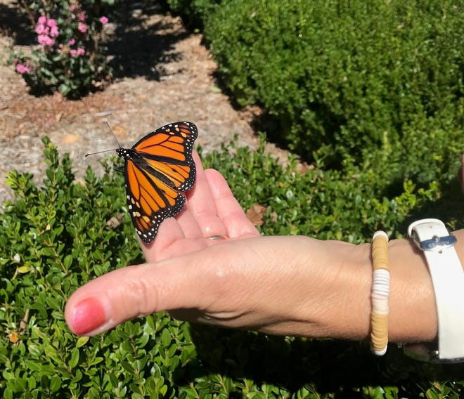 The Hospice of the Ozarks recently held a Celebration of Life and Butterfly Release event in the parking lot of First United Methodist Church in Mountain Home.