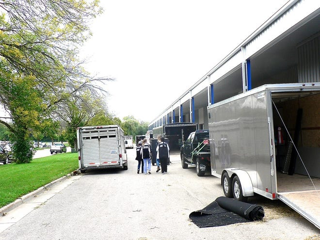 The cattle are transported to the show via semi and trailers.