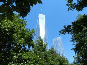Swamp white oaks rise up toward One World Trade Center in New York City.