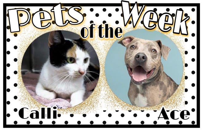 Pets of the Week: Ace and Calli
