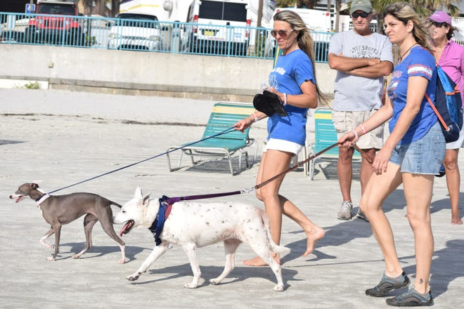 Participants in a past Mutt Strutt take advantage of the weather and the beach.