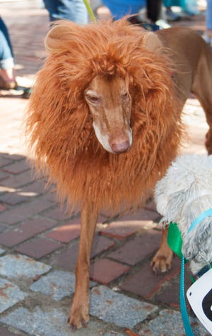 The 3rd Annual Dover Dog Howloween celebration to benefit Pope Memorial Humane Society will take place Saturday, Oct.9