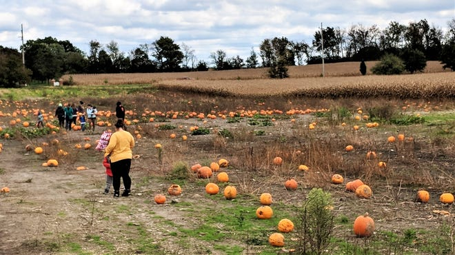 Enjoy a hayride and pick out the perfect Halloween pumpkin at Kingsway Farm in Hartville.