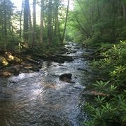 Foothills Conservancy of North Carolina purchased a 130-acre plot of land, which protects more than a quarter mile of Buck Creek, a high-quality mountain stream in McDowell County. In 2022, the land will be added to the Pisgah National Forest.