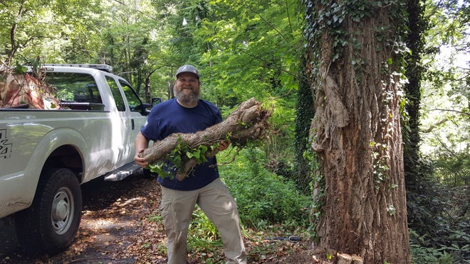 Public works staff member Daniel Wiggs helps the Ivy League with the invasive plant removal.