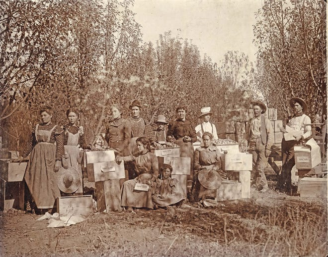 The Hyde Exploring Company's fruit packers pose with the bounty of the season in this photo taken in 1900 and loaned to the Daily Times from the Farmington Museum at Gateway Park's collection. The packers worked for New York philanthropists Benjamin Talbot Babbitt Hyde and his brother, Fred Hyde, Jr.