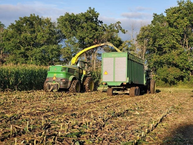 Farmers moved quickly to make corn silage, with80 percent of the crop harvested – 16 days ahead of the average.