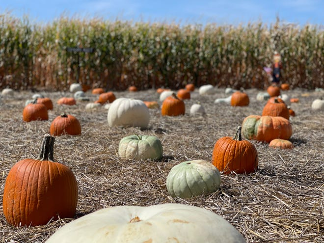 The Jack Creek Pumpkin Patch offers plenty of fall fun for all.
