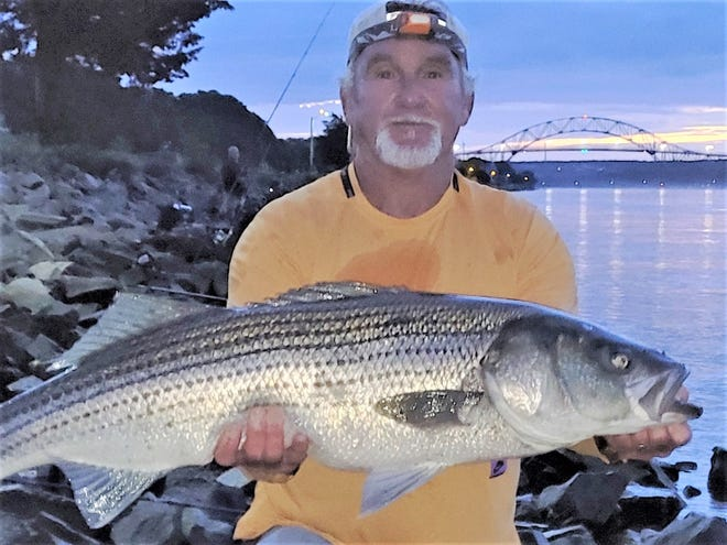 Kenny Nevens of Bourne caught this 41-inch striped bass at first light on a west-rising tide at the Cape Cod Canal.