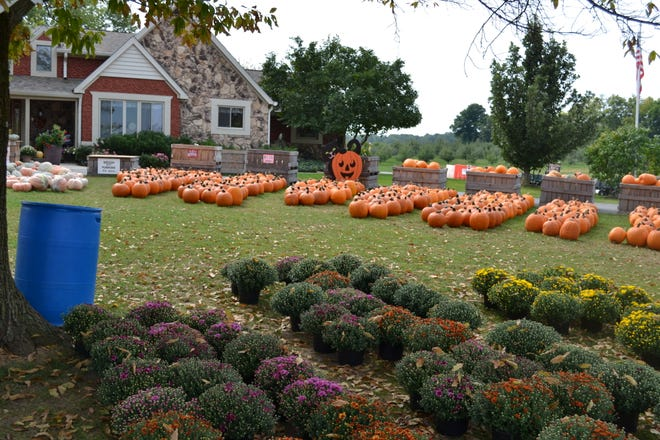Beyond the barn and house, where visitors can shop for apples, sweet treats, pumpkins and more, 100 acres of sprawling orchard are available for families to pick their own fruit.