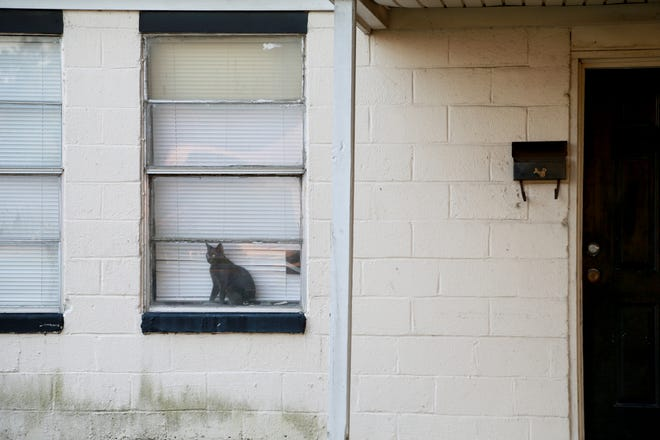 A cat sits in the window of one of the few apartments that is still occupied at Clearview Homes off Carolan Street.