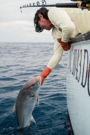 Charlie Locke pulls in an ambjercack, a species of fish found in the warm waters of the Gulf Stream, near the old Diamond Shoals lighthouse, roughly 14 miles southeast of Cape Hatteras.