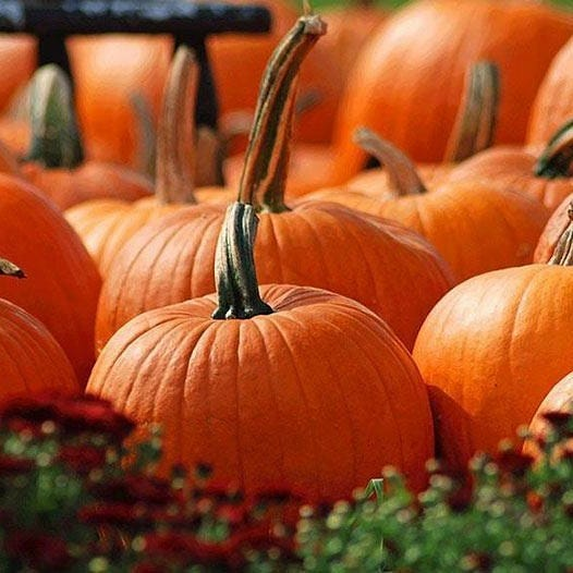 Maury County is set to celebrate several upcoming fall events, including Haunting in the District, haunted houses, pumpkin patches and more.