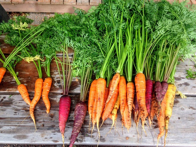 Carrots are the sixth most popularly consumed vegetable in the U.S.